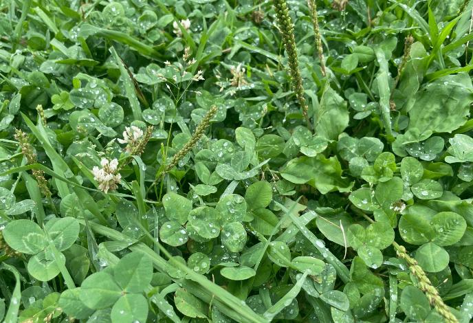雨で濡れた雑草