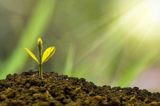 植物の芽が出るところ