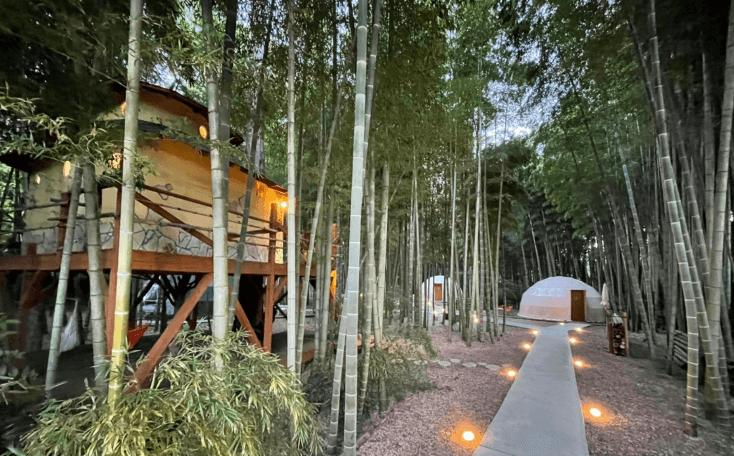 バンブーフォレストの夕方の風景