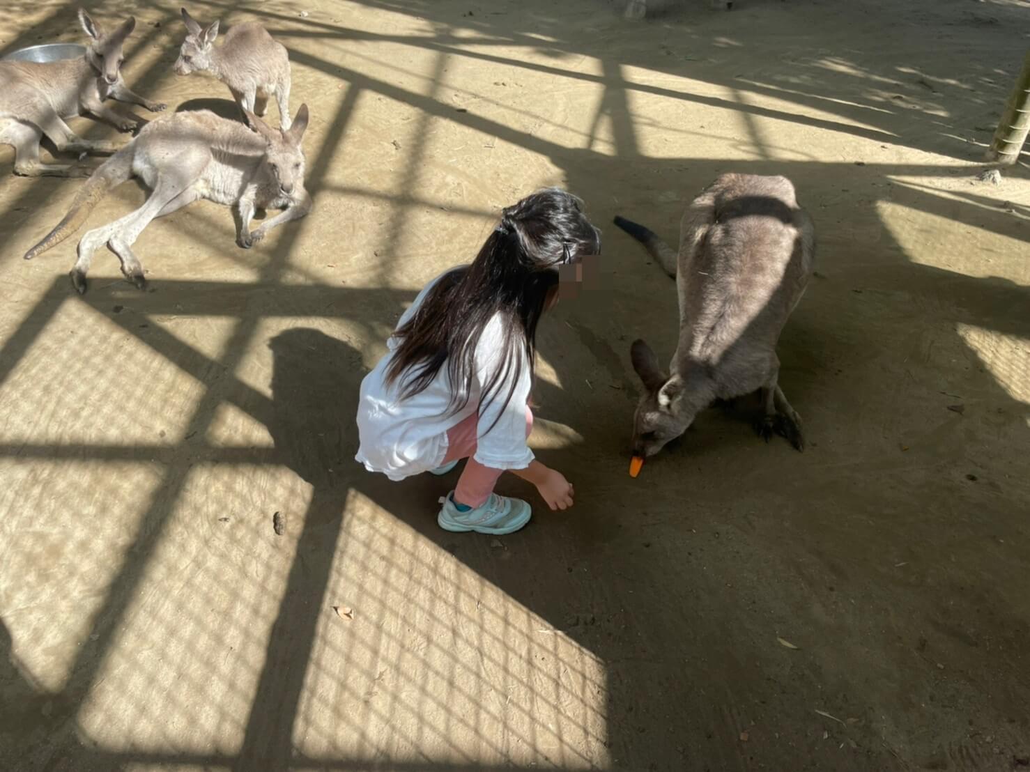 カンガルーへ餌やり