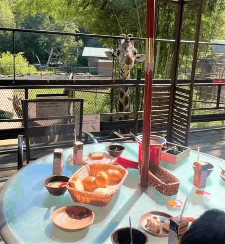 バンブーフォレスト キリンと朝食